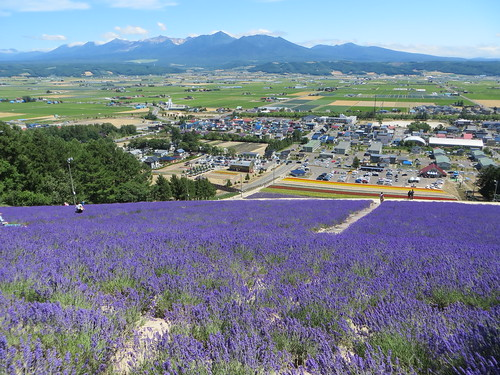 flowers summer mountains landscape hokkaido lavender valley furano skislope nakafurano lavenderpark