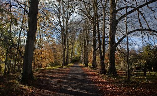 empty road 2c ireland donadea autumn perspective sky 2cireland hugh dempsey