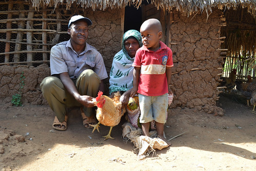 Farmers present their ACGG chicken in Tanga area, Tanzania (Photo credit: ILRI/J.Bruno)