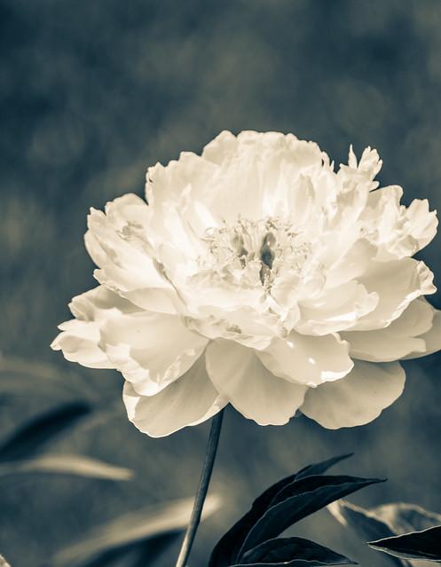 Delicate beauty...