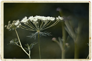 Bokeh Summer Blur of Meadow - Lomography Petzval lens & Nikon D90