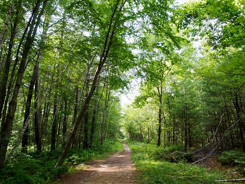 forest shopping walking pond unitedstates weekend newhampshire merrimack unitedstatusofameriaアメリカ合衆国 bostonボストン olympusmzuikodigitaled12mmf20 em101012 merrimackoutdoorshorsehillnaturepreserve lastowkapond
