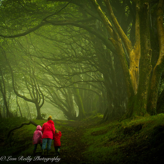 Morning stroll through the Enchanted Wood