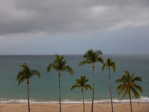 Coconut palms after the storm in Puerto Vallarta