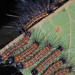 Mon, 06/30/2014 - 12:17pm - Caterpillar family