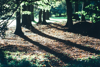 Autumn shadows | by Sina Farhat