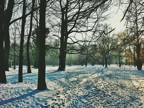 park sunset sun snow forest sunrise woods belgium sneeuw brugge footsteps bruges sunglare veltembos