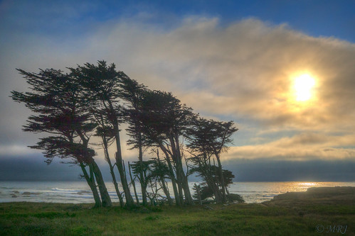 ocean california sunset tree nature view unitedstates hdr fortbragg carlzeiss sonyalpha beachcombermotel a77ii sonyilca77m2