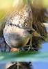 Sora by www.lirongertsman.com