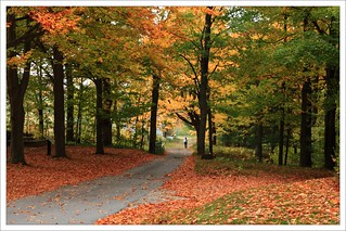 Promenade dans la nature !