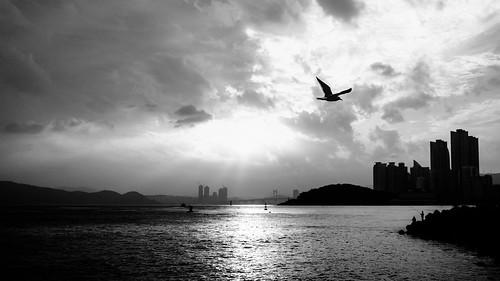 fuji x100s vscocam 23mm fujix100s korean korea fujifilm busan south travel asia kori brus vsco koribrus xseries southkorea blackandwhite blackwhite bw noiretblanc blancoynegro beach ocean sunset city bird gull seagull waves