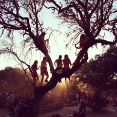 up on trees #boomfestival2014