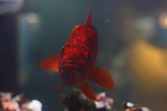 Aquário de Vancouver / Vancouver Aquarium