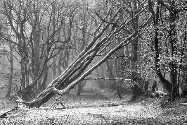 Mist & snow B&W