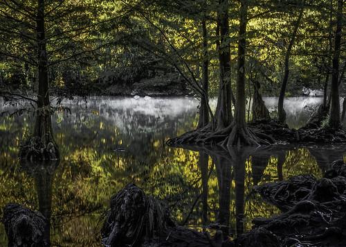 fog foggy redbudisle austin texas fall cypress cypressgrove