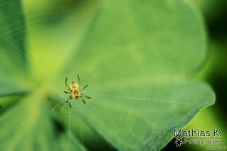 Spinne | Projekt 365 | Tag 200