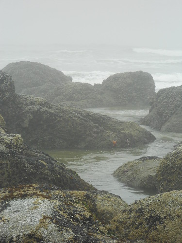 8 Best North American Beaches For Exploring Tide Pools ...  |Pacific Northwest Tide Pool