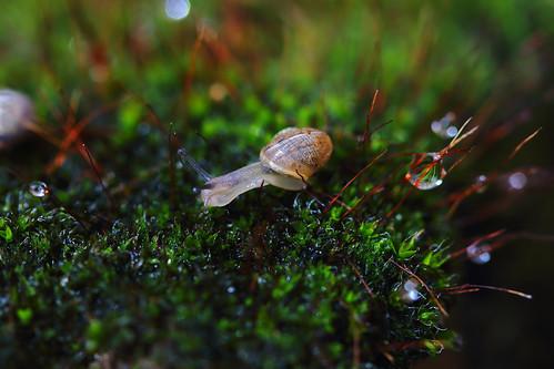 A baby snail