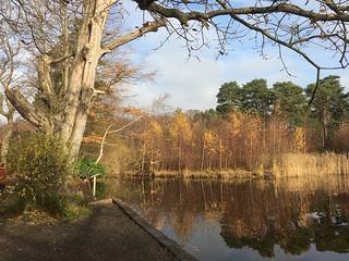 Pond near the start Oxshott to Ashtead walk