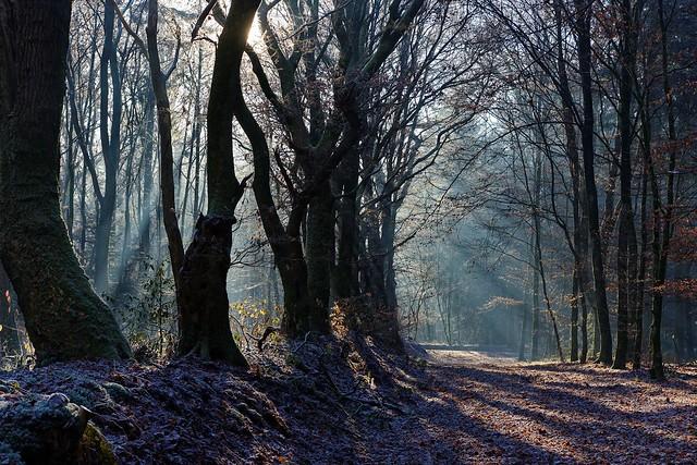 Frost & Nebel....