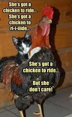She's Got A Chicken To Ride...