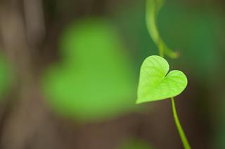 Spread Love! | by VinothChandar