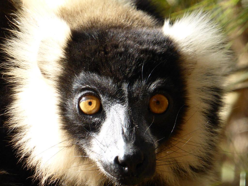 Madagascar (840)
