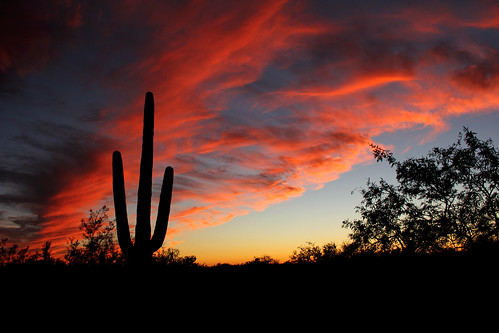 sunsetphotography sunsets sunset cloudsandsky clouds sunandclouds arizona arizonasunset tucson tucsonarizona cactus saguarocactus pink red orange yellow sky