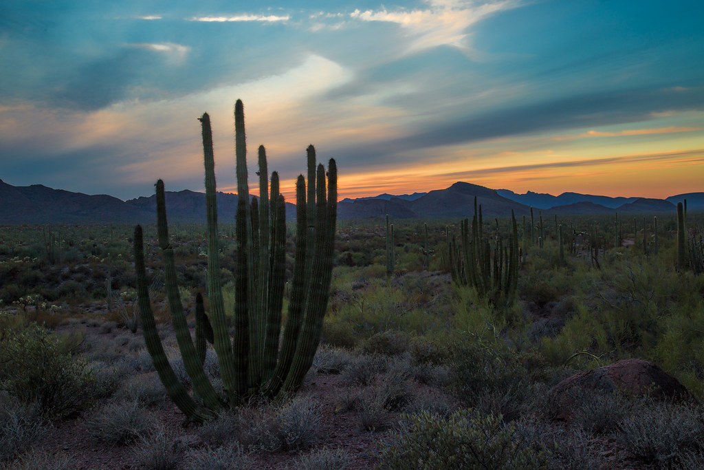 Organ Pipe National Monument at sunset