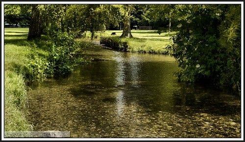 nature views beddingtonparksurrey