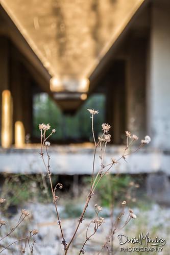 Blurry by Daniel Mihai