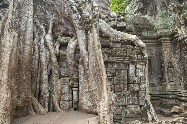 Ta Prohm Temple | Siem Reap