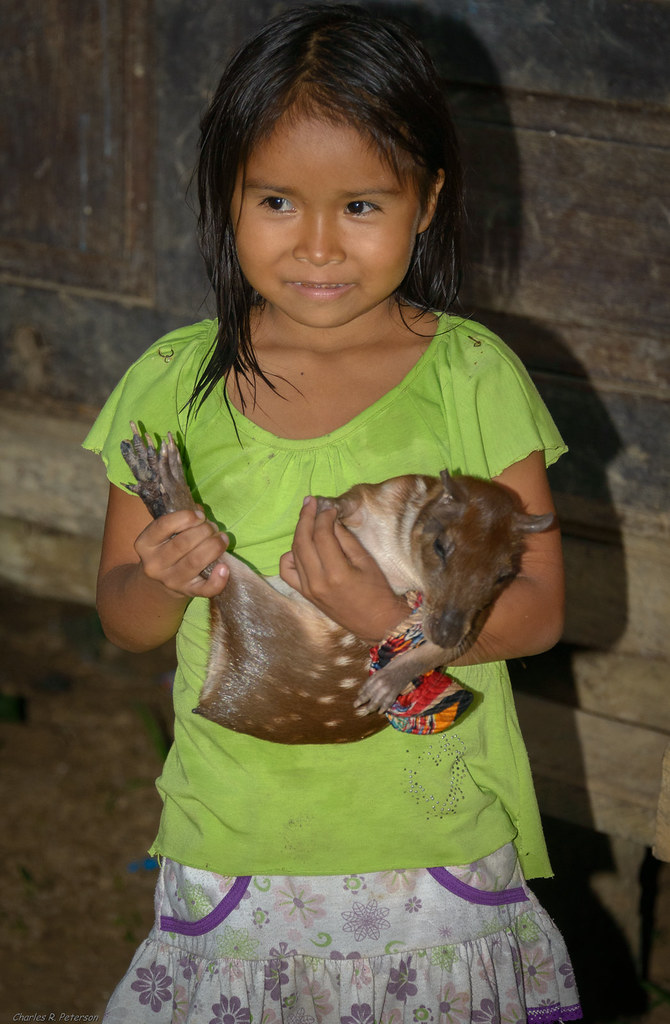 Amazon village girl and lowland paca - Peru