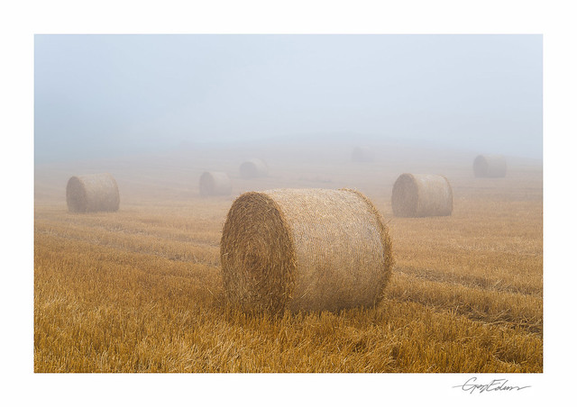 Harvest Fog
