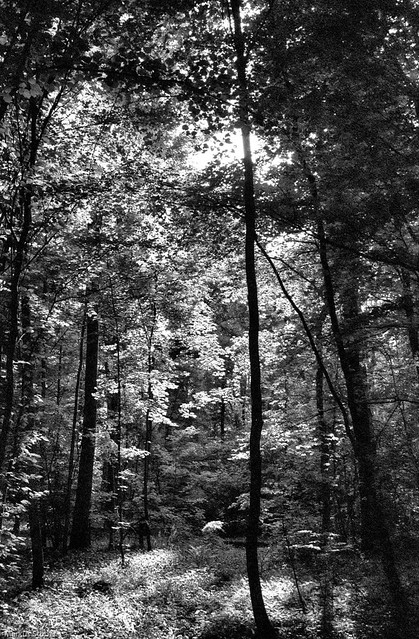 Forest scene in black and white