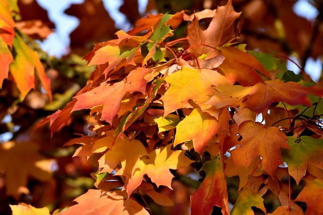 Hues of Autumn.