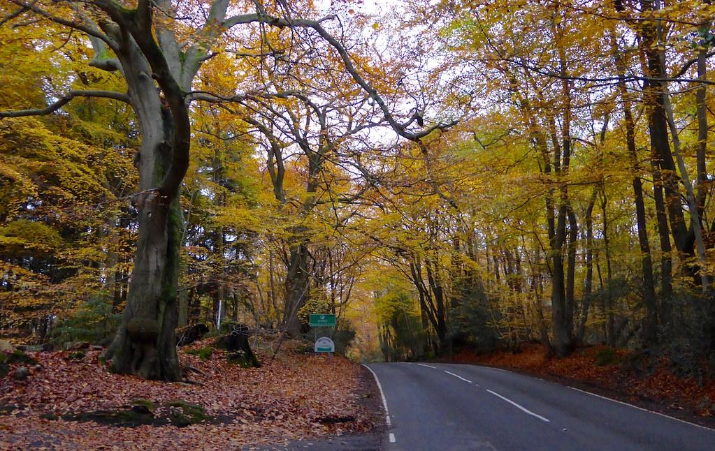 Beeches near Limpsfield Chart Oxted Circular walk