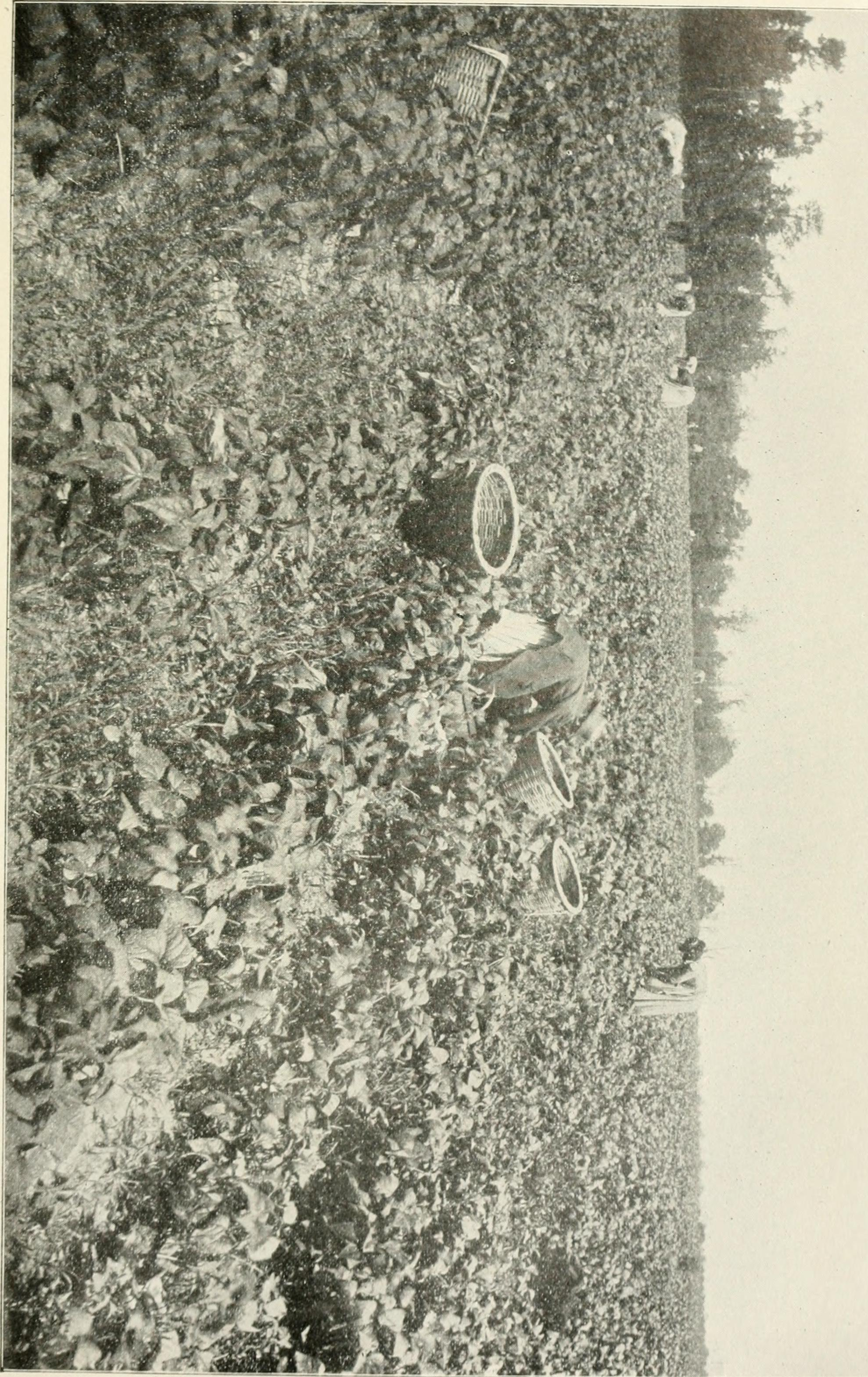 Image from page 240 of