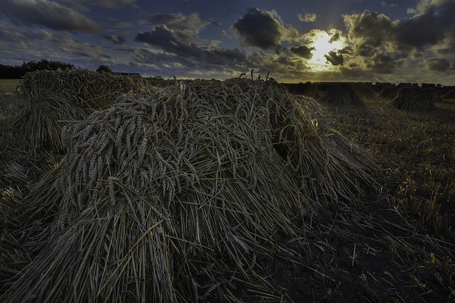 Harvest-time