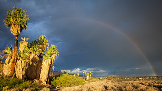 Oasis of Mara Rainbow | by Joshua Tree National Park