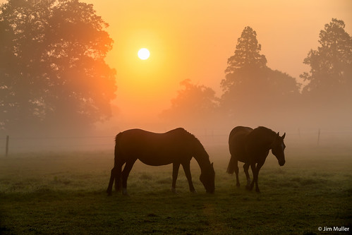 horse mist sunrise
