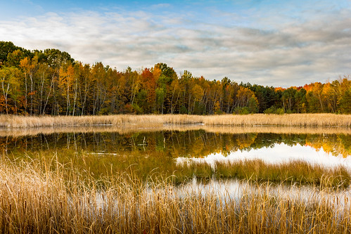 pond sunrise wetland reeds cattails canon t2i efs24mm midland michigan lago ontoño
