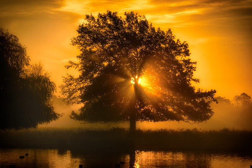 pauliuk99999 sunrise tree water mist fog bushy park heron lake sal70400g