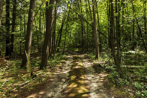 trees woods vermont charlotte path