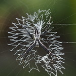 Mi, 01.07.15 - 11:28 - Hübsches Netz