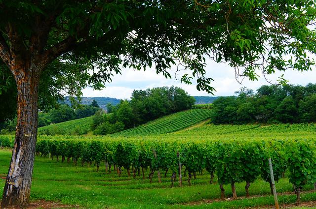 Vignoble de Parnac