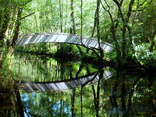 spain hiking galicia woodenbridge senderismo pontevedra lerez riparianforest forcarei puentedemadera riolerez bosquederibera teresalaloba rutadaspontesdolerez fishingtrail senderodepescadores senderofluvial prg113 riolerez007 duasigrexas
