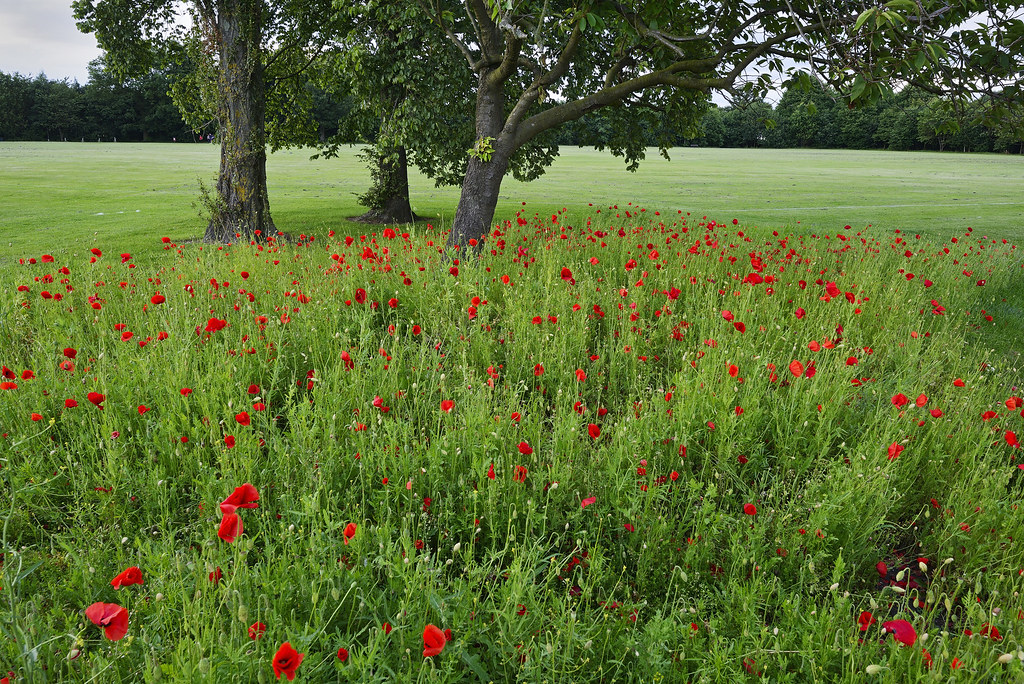 Poppies, Bloxwich 05/07/2014