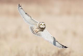 owl2   by N.V.M.
