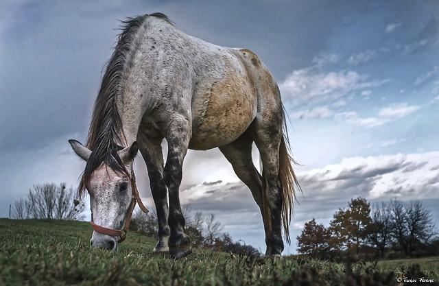 A friendly, nice white horse ..